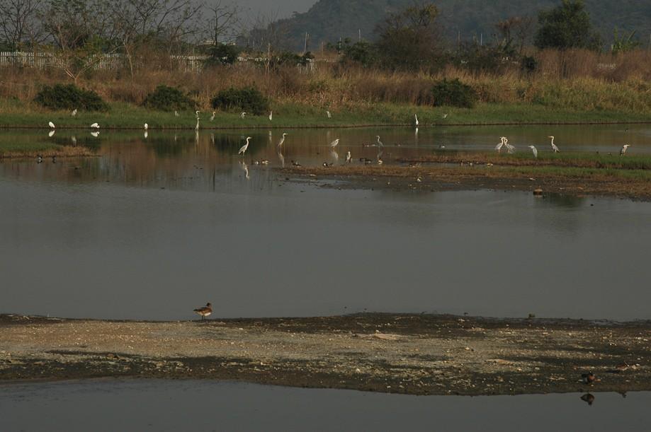 泥滩观鸟屋