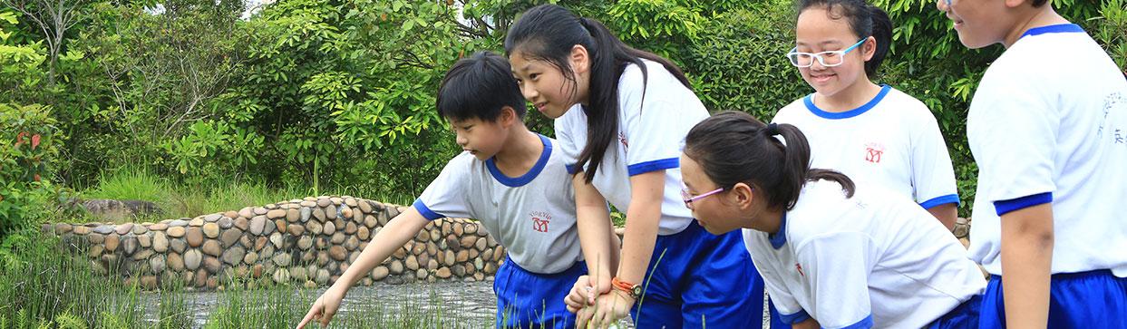 湿地体验 II